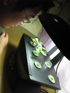 There is nothing more fascinating that his aerogarden at the moment...