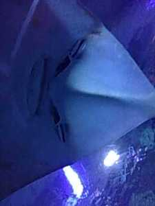Thats what it feels like being face to face with a giant manta ray. This ray must be of Chinese descent - check out those slanted eyes. It sure looks mad!