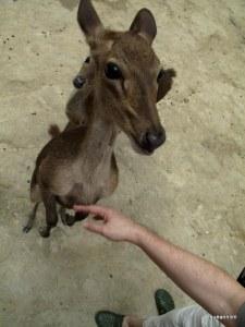 One of the cute deer in Deerland.