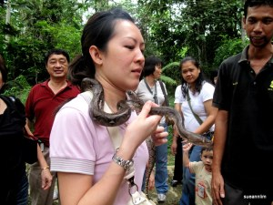 A First~! Baby python around my neck! Snake skin is indeed smooth but not slimy. And it was like a slithering mass of muscles moving. It kept trying to go round my neck - hence my facial expression.
